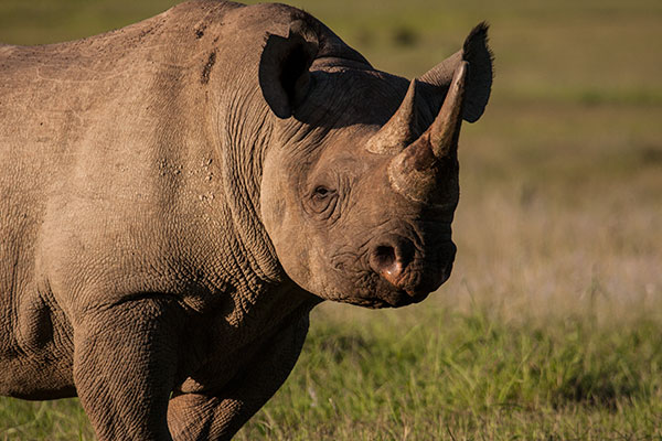Addo Tour Packages
